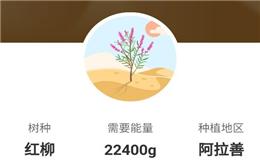 支付宝蚂蚁森林上线新树种红柳 需花费22400g能量